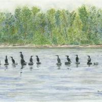 cormorants-bevkadowart